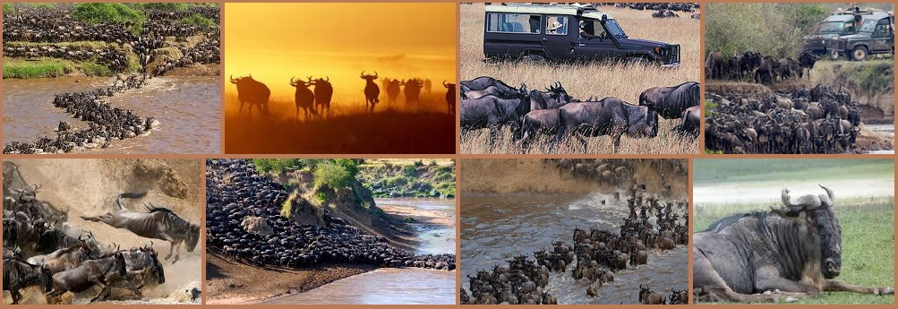 African Safari |Kenya Safari | Luxury Tour Packages from India - The